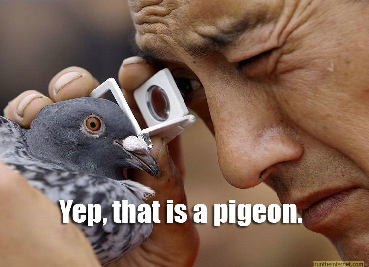 War on pigeons 2