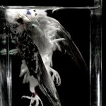 Self destruction lovebird 5 | Bemmel
